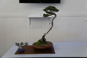 Wauchope Bonsai Workshop Group - Pubs Perth