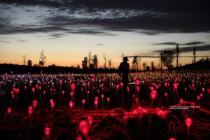 Field of Light Uluru - Pubs Perth